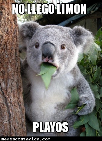 Stoned Koala Meme Cake Ideas and Designs