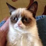 gan-grumpy-cat-112612-1-4_3_r560